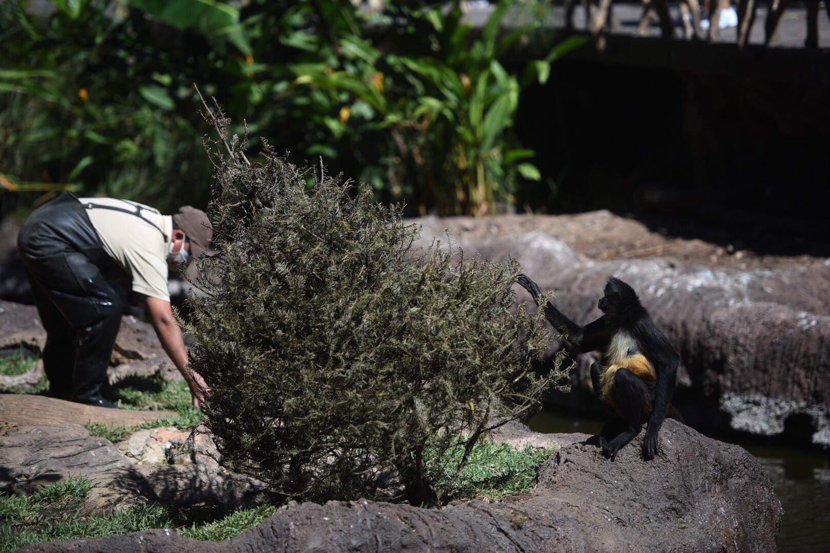 Donación de árboles navideños en el Zoológico La Aurora
