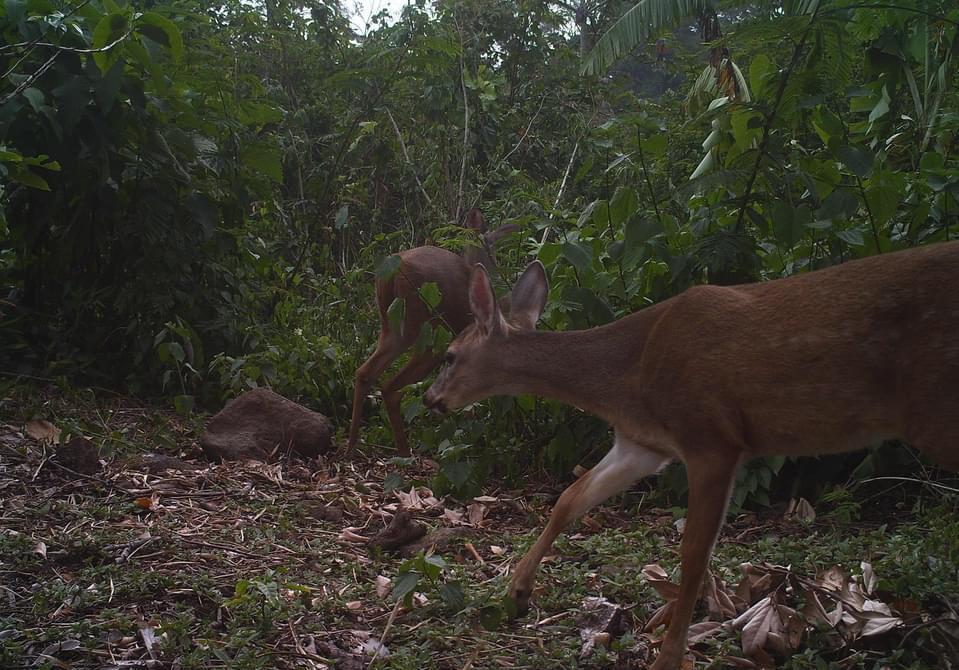 fauna afectada por incendio en volcán Atitlán