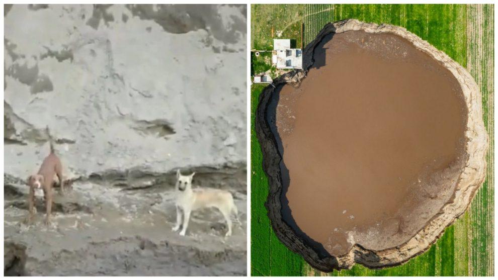 Rescatan a perros que quedaron atrapados en enorme socavón en México